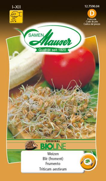 BIO-Speisekeimlinge Weizen