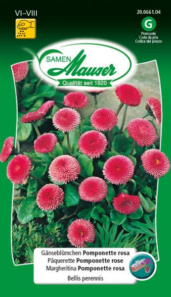 p querette pomponette rose graines de fleurs plantes bisannuelles samen mauser. Black Bedroom Furniture Sets. Home Design Ideas