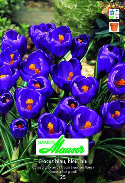 Außergewöhnlich Krokus Ideal blau, 25 Knollen - Blumenzwiebeln Herbst / Krokus @NL_79