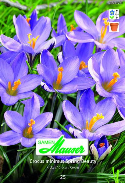 Krokus Spring Beauty, 25 Zwiebeln