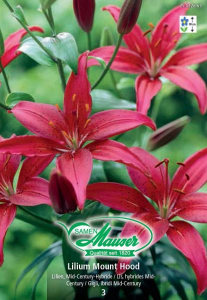 Lilien Mount Hood, Lilium Mid-Century-Hybriden, 3 Zwiebeln