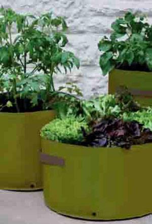 Gemüse-Pflanzgefäss
