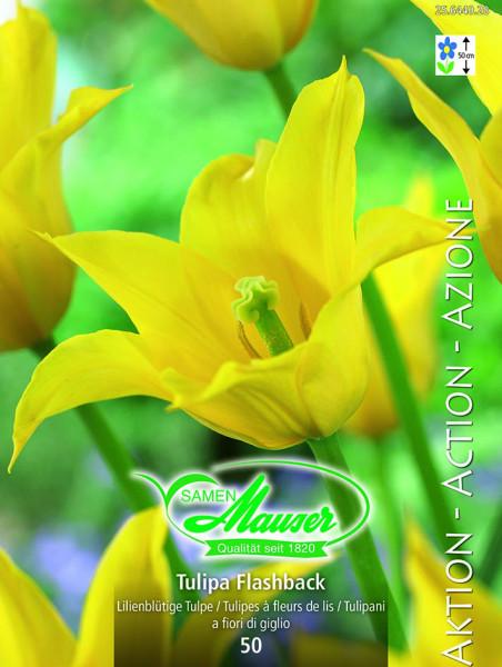 Flashback, Aktion,  Lilienblütige Tulpe, 50 Zwiebeln