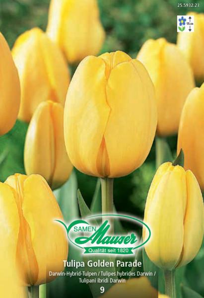 Golden Parade, Darwin-Hybrid-Tulpe, 10 Zwiebeln