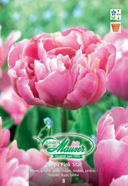 Pink Star, Späte, gefüllte Tulpe, 10 Zwiebeln