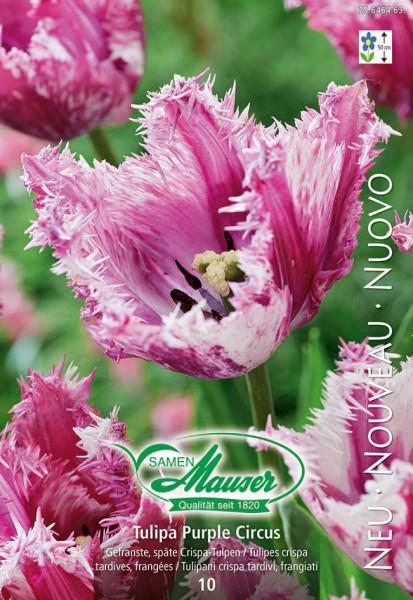 Purple Circus, Crispa-Tulpe, 10 Zwiebeln