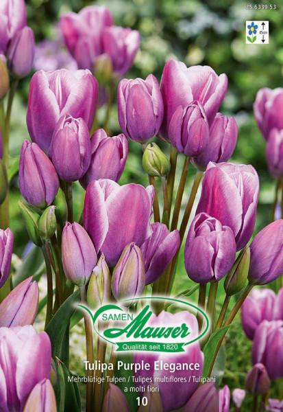 Purple Elegance, Bouquet-Tulpe, 10 Zwiebeln