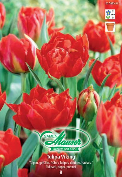 Viking, Frühe, gefüllte Tulpe, 10 Zwiebeln