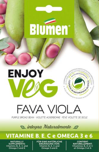 Ackerbohne violett (Vicia faba)
