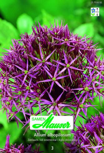 Allium christophii, Zierlauch, 3 Zwiebeln
