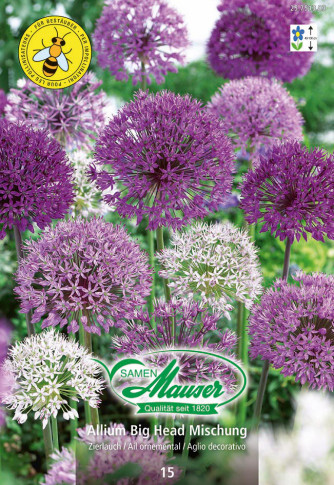 Allium Mischung Big Head, 15 Zwiebeln