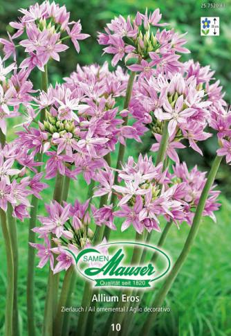 Allium Eros, Zierlauch, 10 Zwiebel