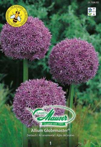 Riesen Allium Globemaster, Zierlauch, 1 Zwiebel