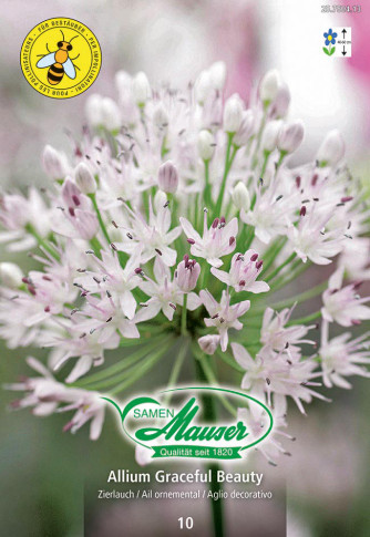 Allium, Zierlauch Graceful Beauty, 10 Zwiebeln