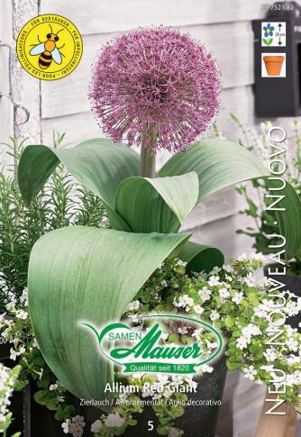Allium Red Giant, Ail décoratif, 5 bulbe