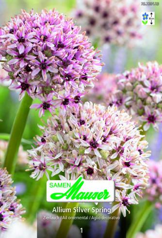 Allium Silver Spring, Zierlauch, 1 Zwiebel