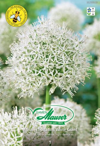 Allium White Giant, Zierlauch, 1 Zwiebel
