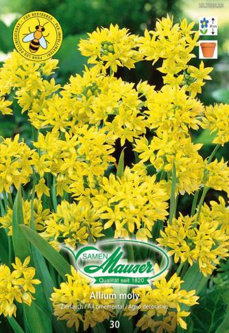 Allium moly, Goldlauch, 30 Zwiebeln