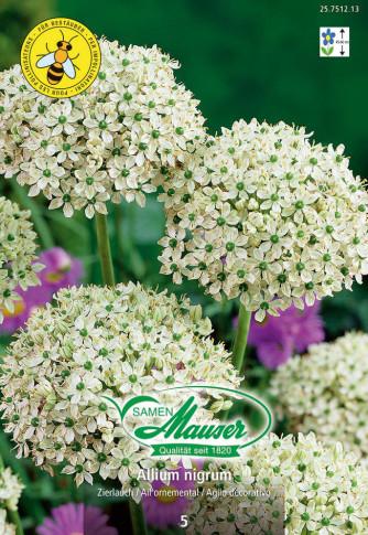 Allium nigrum, Zierlauch, 5 Zwiebeln