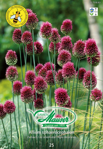 Allium sphaerocephalon, 25 Zwiebeln