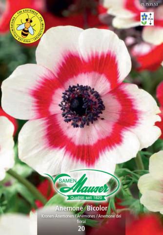 Anemonen Bicolor
