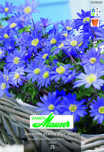 Blue Shades, Anemonen blanda, 25 Knollen