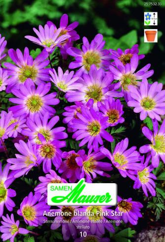 Pink Star, Anemone blanda, 10 Knollen