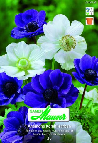 Anemonen Mischung blue & white