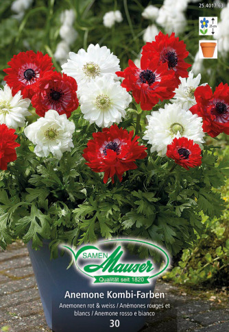 Anemonen Mischung red & white