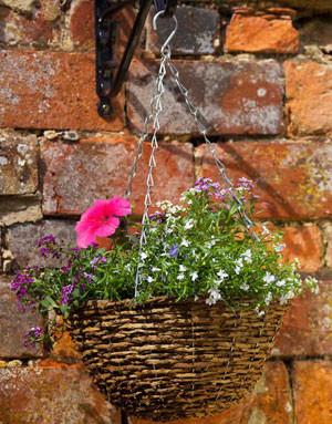 Blumenampel 'Country'