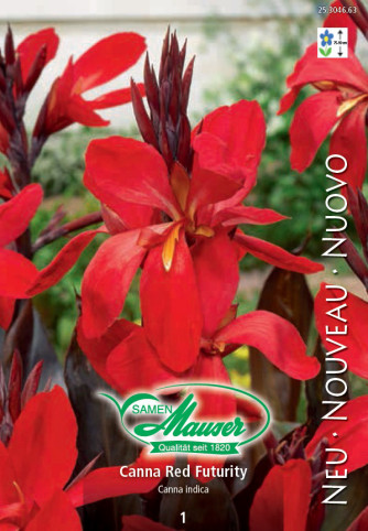 Canna Red Futurity au feuillage sombre