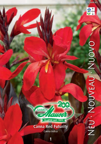 Canna Red Futurity dunkles Laub