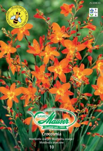 Montbretie orange