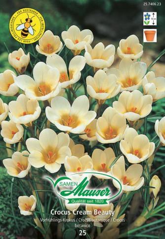 Krokus Cream Beauty, 25 Knollen