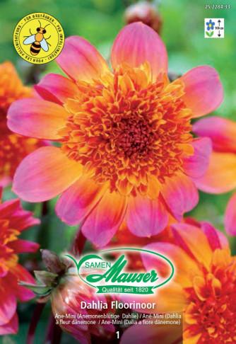 Anemonenblütige Dahlie Floorinoor