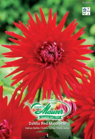 Kaktus-Dahlie Red Majorette