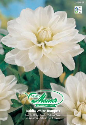 Seerosen-Dahlie White Bouquet
