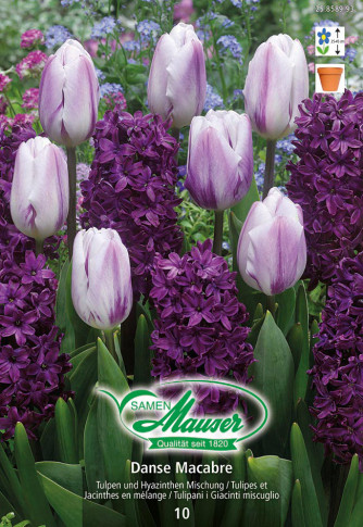 Danse Macabre - Mischung Tulpen und Hyazinthen