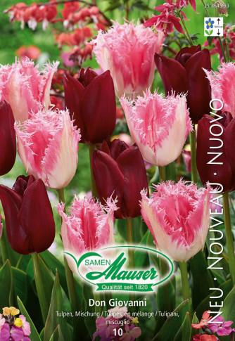 Don Giovanni - Tulpenmischung