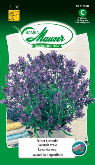 Lavendel echter