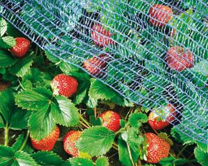 Erdbeer-Schutznetz