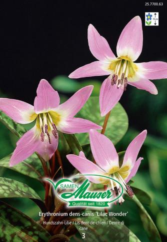 Erythronium dens-canis Lilac Wonder, Hundzahn-Lilie, 3 Zwiebeln