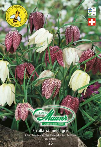 Fritillaria meleagris Mischung, Schachbrettblume, 25 Zwiebel