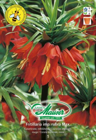 Fritillaria imperialis rubra Maxima, Kaiserkrone, 1 Zwiebel