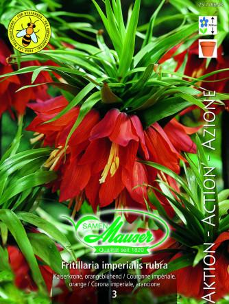 Fritillaria imperialis rubra Maxima, Aktion, 3 Zwiebeln