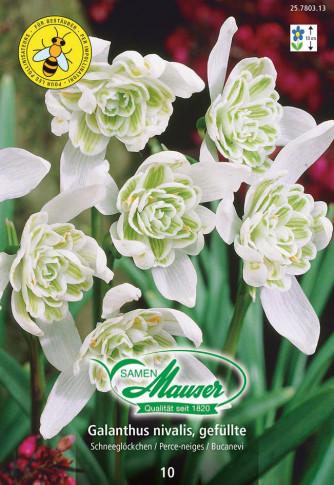 Galanthus nivalis, gefüllt, 10 Knollen