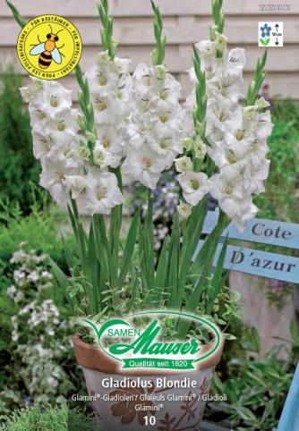 Gladiolus Glamini® Blondie