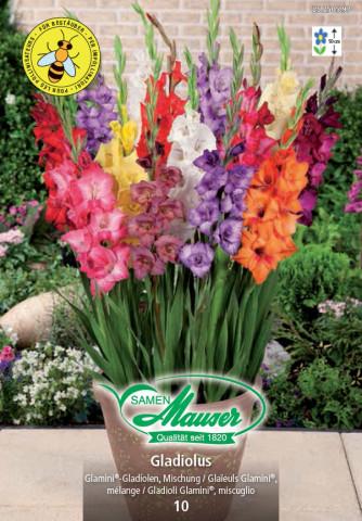 Gladiolus Glamini® Mix