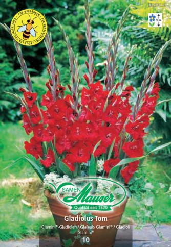 Gladiolus Glamini® Tom