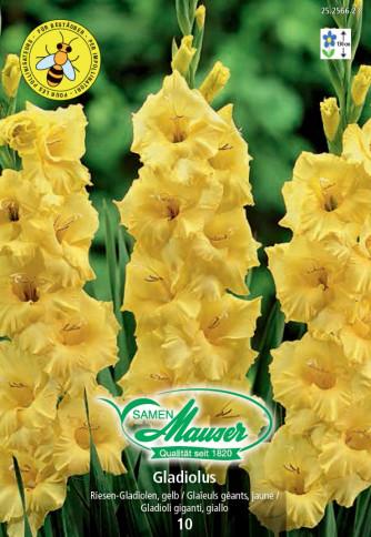 Gladiolen gelb